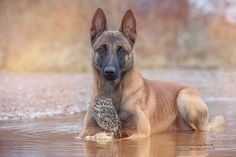 An Adorable And Unlikely Friendship Between An Owl and A Dog - DesignTAXI.com