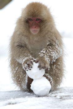 Snowman, Jigokudani, Nagano, Japan