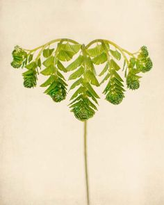 Maidenhair Fern Art Print - fine art botanical print by Allison Trentelman   Rocky Top Studio