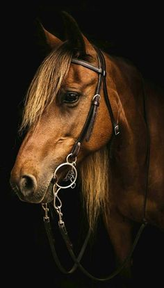 Today's photos collection based on cute animal photography . All The Pretty Horses, Beautiful Horses, Animals Beautiful, Beautiful Gorgeous, Absolutely Gorgeous, Horse Photos, Horse Pictures, Animal Pictures, Equine Photography