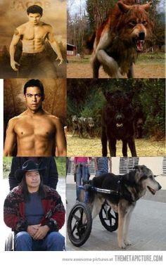 Twilight Werewolf Transformations