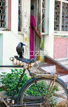 bird on a bike - A bird sits on a bike seat in front of a home in Odanadi, India