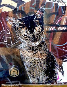 Cat Street Art by c215