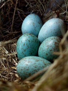 When it comes to birds, avid watchers know that you can never have too many bird houses in your yard. Birds appreciate these items during the nesting and Love Birds, Beautiful Birds, Nester, Blue Eggs, Brown Eggs, By Any Means Necessary, Kodak Moment, Robins Egg, Beltane