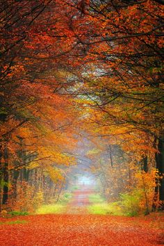 Caminos y senderos on pinterest roads driveways and trail - Caminos y senderos ...