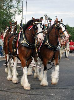LIVIVIDLI LIFESTYLE BLOG: BUDWEISER CLYDESDALE HORSES IN LUDINGTON, MICHIGAN