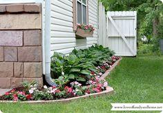 side yard garden hosta