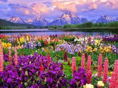 Teton national park USA