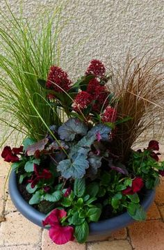 5 Easy Containers for Stunning Winter Colour – from the Weatherstaff PlantingPlanner Skimmia japonica, ornamental grasses, dark-leaved heuchera and winter pansies make a great winter-interest container. Add bulbs for spring flowers too! Winter Container Gardening, Container Herb Garden, Container Gardening Vegetables, Container Plants, Garden Pots, Vegetable Gardening, Winter Potted Plants, Winter Planter, Fall Planters