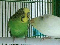 avianawareness:  My favorite birdy gif
