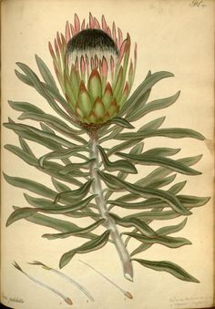 v4 the botanists repository for new and rare plants biodiversity