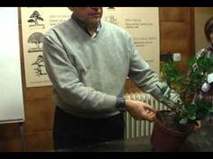 Transplante de un madroño de vivero.mpg - YouTube