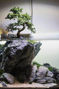 """Use your imagination"" by Filipe Oliveira. A tree aquascape with a real bonsai tree above water. Use your imagination by Filipe Oliveira. A tree aquascape with a real bonsai tree above water. Planted Aquarium, Aquarium Aquascape, Aquarium Terrarium, Home Aquarium, Aquariums, Aquarium Fish, Aquascaping, Aquarium Design, Plantas Bonsai"