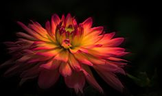 Glowing II by John Ellingson on 500px