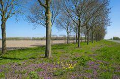 fleurs des champs: Fleurs pourpres sous les arbres au printemps