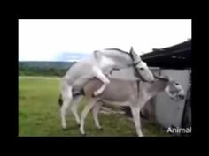 Funny Animal MATING Horse mating with donkey Funny horse mating with oth...