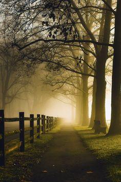 tearingdowndoors:  Foggy Path |Mark Jones