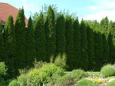 A tujasövény szép lesz ide, ugye? Vineyard, Mountains, Architecture, Nature, Plants, Travel, Outdoor, Gardening, Arquitetura