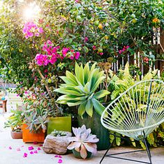 The all-container garden- How to create a lush backyard without putting a single plant in the ground. Plus we can take them all with us when we sell the house.