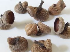 7 Double and 15 Fancy Unfinished Large Oak Acorn Caps by bytheinch