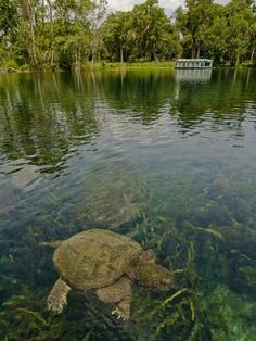 Ocala National Forest : National Parks Near Miami : TravelChannel.com