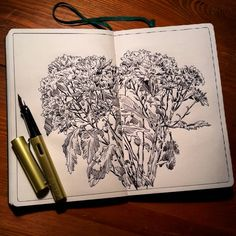 """Picture of the day chrysanthemum"" one hour and therty minutes of drawing with living nature.(fountain pen drawing)#lifesketch #illustratedlife #illustration #inksketch #alexsaypastart #lamyalstar #lamy#sketch #usk #drawingday#графика #рисунок #скетч #молескин #скетчбук #moleskine_arts #moleskine #instaart #artist #pendrawing #linedrawing #fountainpen #fountainpenink #екатеринбург #цветы#flowers #nature #sketchbook #linework#рисование"