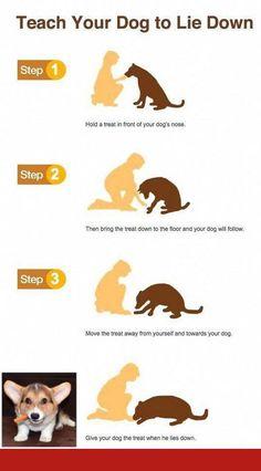 Good dog training apps and off leash training las vegas.