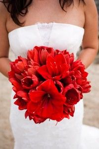 Red amaryllis wedding bouquets | I'm not a fan of the single color, but I like the texture of the petals.