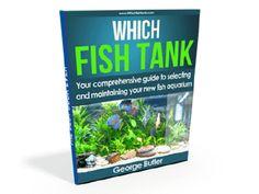 Which Fish Tank E-Book Tropical Freshwater Fish, Tank You, Aquarium Fish, Starter Kit, Fish Tank, Fresh Water, Book, Fishbowl, Aquarium