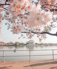 National Cherry Blossom Festival, United States #Washington Tidal Basin  #Trip #Travel #Sightseeing Spots, Superb Views #SuperbView #Destination #Spring #Flower #CherryBlossom Stunning View, Cherry Blossoms, Basin, Attraction, Washington, United States, Spring, Flowers, Travel