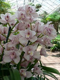 cymbidium orchids - Buscar con Google