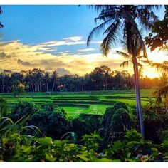 the Sun is Up! Greeting to world! Are you ready for this weekend? Where will you go? Paradise, Bali!   ============================== Photo by @timothysykes Thanks for sharing.  NOTE : KEEP BALI CLEAN IF WANT TO REGRAM FROM THIS PAGE PLEASE MENTION @fascinatingbali & PHOTO'S OWNER. THANKS  ============================== Visit our Site (link on Bio) Keep use hashtag #fascinatingbali to allow Us feature your moment in Bali ============================== #sunrise #ubud #ricefields #bali #travel…