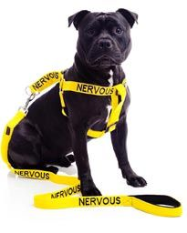 I love these! They are much easier to understand than ribbons and come in leashes, collars, harness, vests...etc. Designations include: Friendly, No Dogs, Caution, Nervous, Training, Blind, Adopt Me, Working, Deaf, and Do Not Feed.