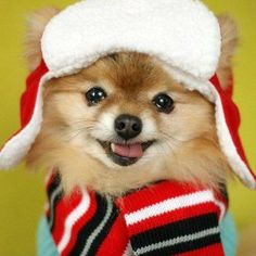 Stormy the pomeranian in winter costume by build-a-bear. Puppy Dogs Puppies Dog