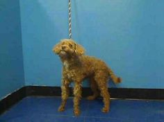 Manhattan NY.  Lucky.  Male.  13 yrs.  Dies in a.m.  See Urgent Part 2 on fb.***RESCUED***