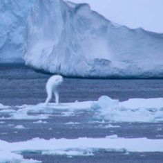 Over the past few years, rumors have circulated in Japan about the existence of gigantic humanoid life-forms inhabiting the icy waters of the Antarctic.