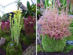 Hampton Court Palace Flower Show: Gardener's Supply