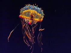 colorful jelly fish