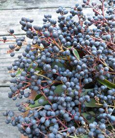 privet berries -Fun & stylish BERRIES for your wedding or event  ! Order wholesale DIY flowers & BERRIES online. www.fabulousflorals.com  #berries   #diyflowers #wholesaleflowers