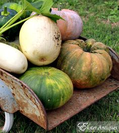 Every color of gourds and pumpkins are fine with me!