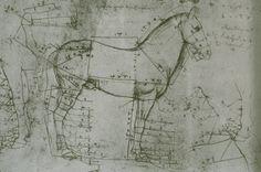 The Horses of Leonardo da Vinci. Horse anatomy