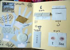 5 Senses Lapbook#Repin By:Pinterest++ for iPad#