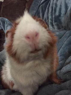 Cute pig face!
