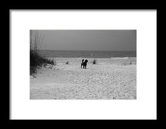 dog, beach, gulf, anna maria island, florida, nature, landscape, blackand white, michiale schneider, photography