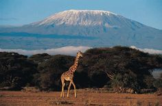 places i'd like to visit | Mount Kilimanjaro, Tanzania | Places I'd like to visit  - Explore the World with Travel Nerd Nici, one Country at a Time. http://TravelNerdNici.com
