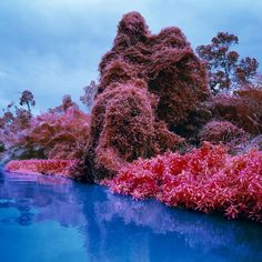 Richard Mosse, Invasive Exotics, 2012. Digital c-print. © Richard Mosse. Courtesy of the artist and Jack Shainman Gallery, New York.