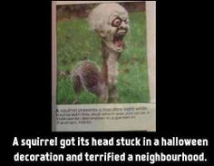 Scary #Squirrel makes it to the #headlines