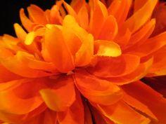 a burst of orange