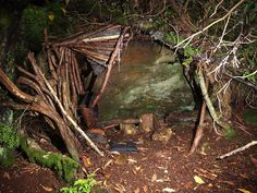 Have some fun building a little den in woodland close to Corby Cottage.