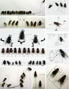 Magnus Muhr's Comic Relief Courtesy Of Carefully Positioned Flies